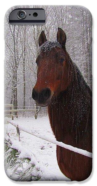 Morgan Horse Christmas iPhone Case by Elizabeth Dow