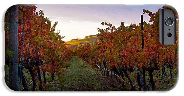 Crops iPhone Cases - Morning at the Vineyard iPhone Case by Bill Gallagher
