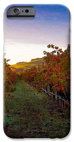 Morning at the Vineyard iPhone Case by Bill Gallagher