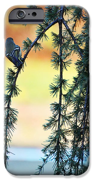 Surtex Licensing iPhone Cases - Morning bird song iPhone Case by adSpice Studios
