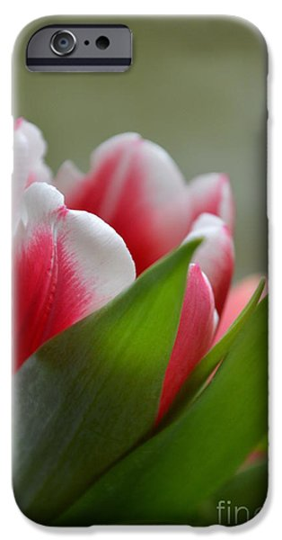 Photos With Red iPhone Cases - Morning Brilliance iPhone Case by Felicia Tica