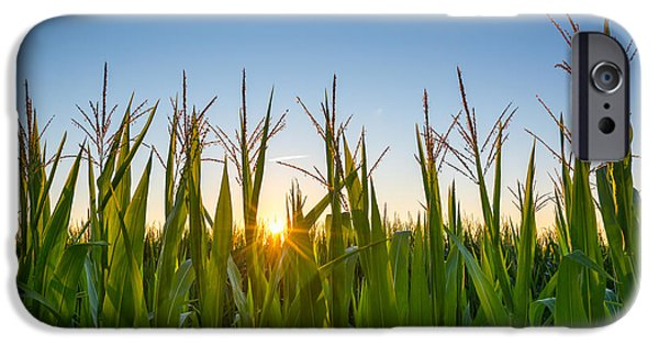 Michael Versprill iPhone Cases - Morning Crops iPhone Case by Michael Ver Sprill