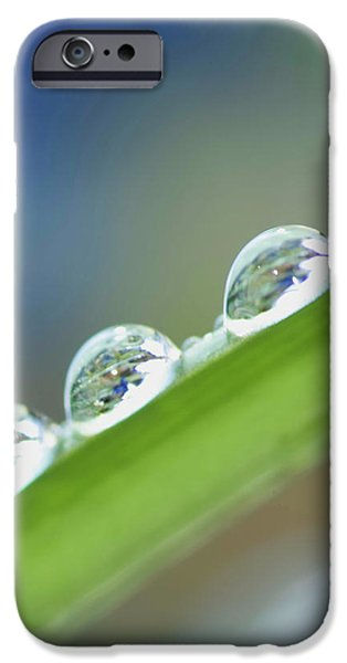 Morning dew drops iPhone Case by Heiko Koehrer-Wagner