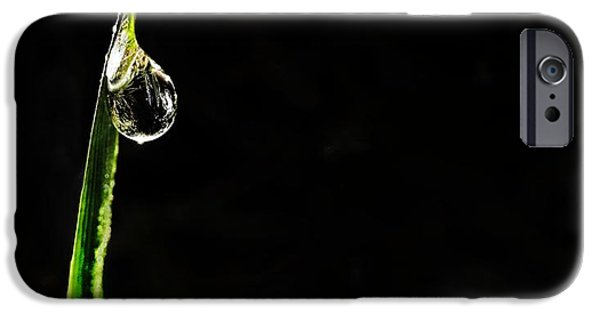 Morning iPhone Cases - Morning Dew iPhone Case by Marianna Mills