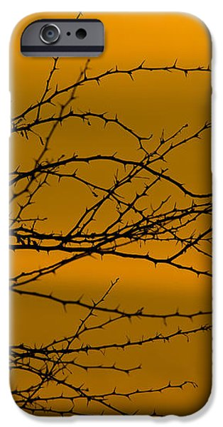 Morning Dove iPhone Case by Kelly Gibson