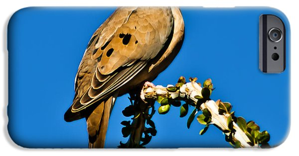 Haybale iPhone Cases - Morning Dove iPhone Case by Robert Bales
