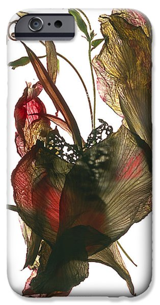 Canna iPhone Cases - Morning Glory Canna Heart iPhone Case by Julia McLemore