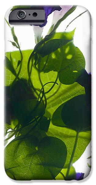 Botanical iPhone Cases - Morning Glory Rising iPhone Case by Julia McLemore