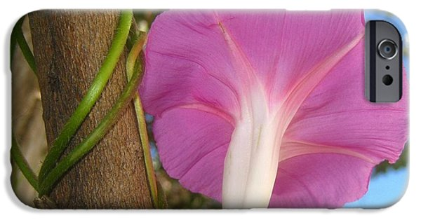 Morning Reliefs iPhone Cases - Morning Glory  Vine iPhone Case by John King