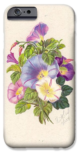 Flora Drawings iPhone Cases - Morning Glorys iPhone Case by Ruth Seal