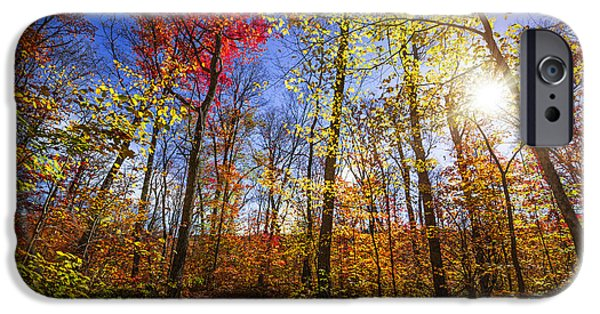 Forest iPhone Cases - Morning in autumn forest iPhone Case by Elena Elisseeva
