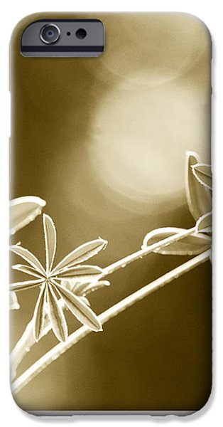 Morning iPhone Case by Artist and Photographer Laura Wrede