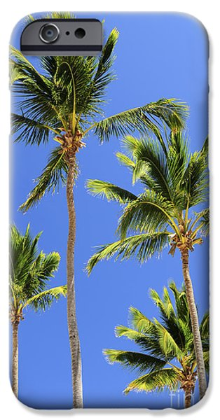 Park Scene iPhone Cases - Morning palms iPhone Case by Elena Elisseeva