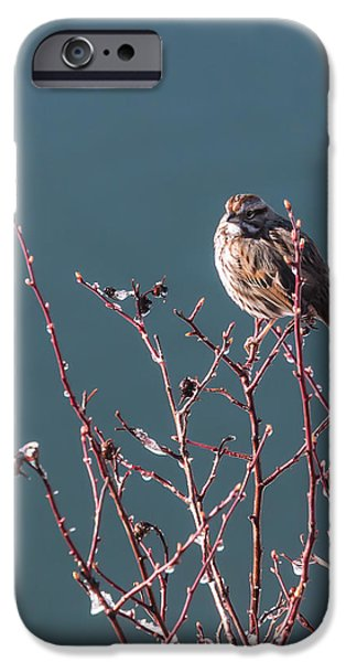 Willow Lake iPhone Cases - Morning Sparrow iPhone Case by Jan Davies