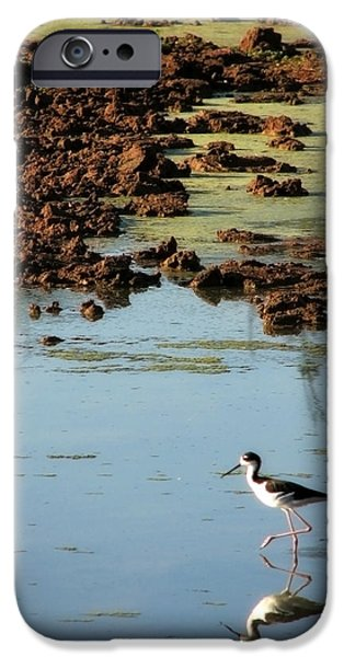 Alga iPhone Cases - Morning Stroll iPhone Case by Lisa S Baker