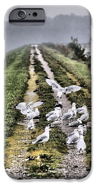 Flying Seagull iPhone Cases - Morning Walk iPhone Case by Dan Sproul
