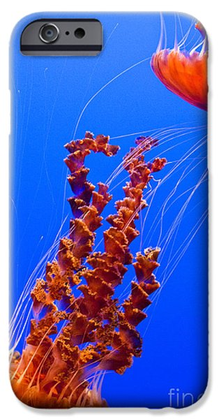 Pch iPhone Cases - Monterey Bay Aquarium 3 iPhone Case by Micah May