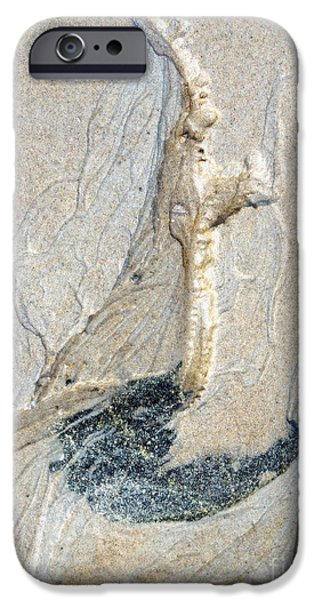 Sand Castles iPhone Cases - Mosquito 7 iPhone Case by Marcia Lee Jones