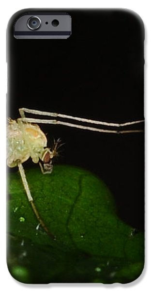 Mosquito iPhone Case by Paul Ward