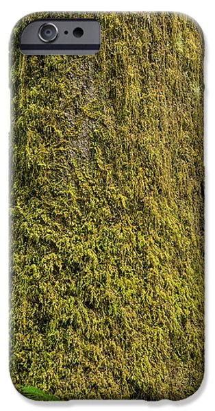 Moss iPhone Cases - Moss Covered Tree Olympic National Park iPhone Case by Steve Gadomski