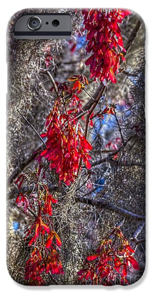 Spanish Moss iPhone Cases - Moss on The Red Tree iPhone Case by Marvin Spates