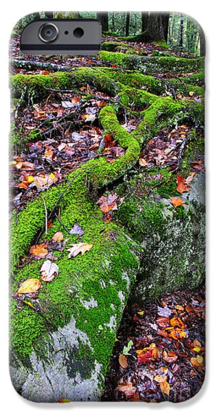 Tree Roots Photographs iPhone Cases - Moss Roots Rock and Fallen Leaves iPhone Case by Thomas R Fletcher