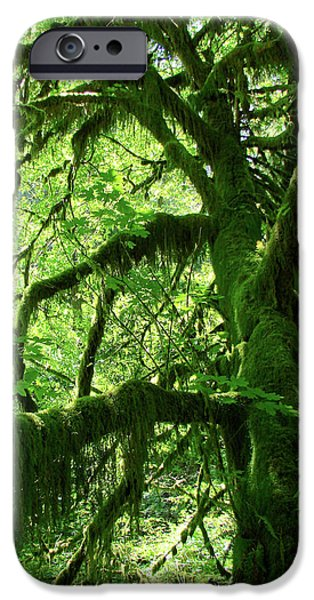 Mossy Tree iPhone Case by Athena Mckinzie
