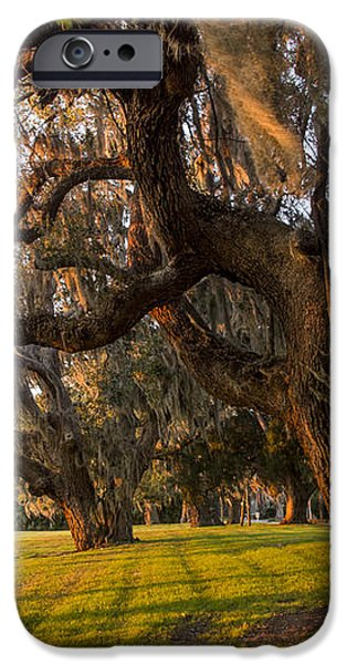 Mossy Trees at Sunset iPhone Case by Debra and Dave Vanderlaan