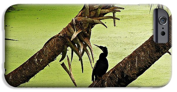 Nature Center Pond iPhone Cases - Mossy Wetland with Anhinga iPhone Case by MTBobbins Photography