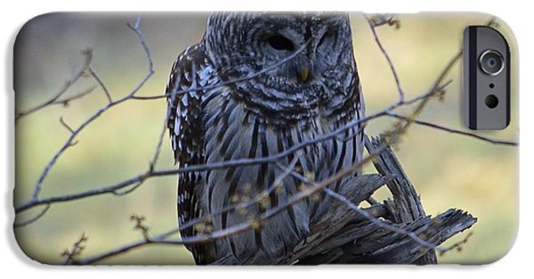 Animals Photographs iPhone Cases - Mostly Awake iPhone Case by Randy Bodkins