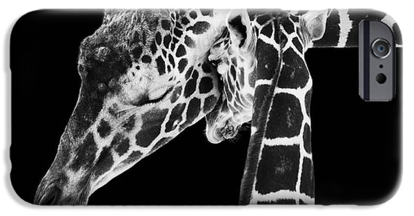Study iPhone Cases - Mother and Baby Giraffe iPhone Case by Adam Romanowicz