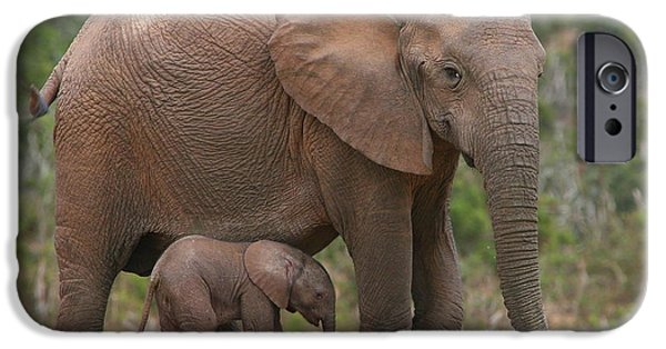 Elephants Photographs iPhone Cases - Mother and Calf iPhone Case by Bruce J Robinson