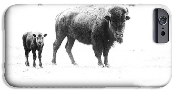 Animals Photos iPhone Cases - Mother Bison and her Calf iPhone Case by Melany Sarafis