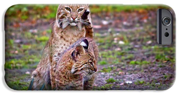 Bobcat Kittens iPhone Cases - Mother Bobcat and Kitten iPhone Case by Mark Andrew Thomas