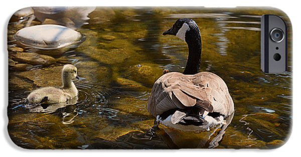 Mother Goose iPhone Cases - Mother Goose Il iPhone Case by Maria Angelica Maira
