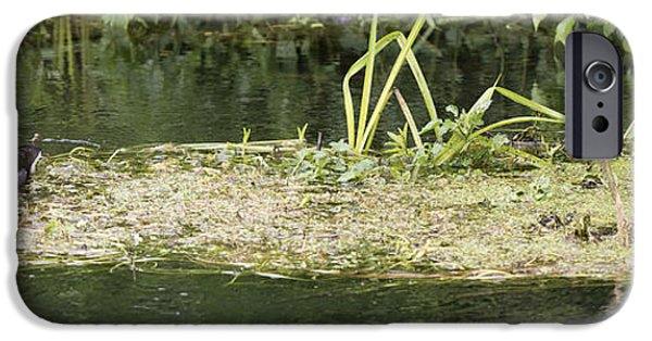Baby Bird iPhone Cases - Moorhen Life iPhone Case by Steven Poulton