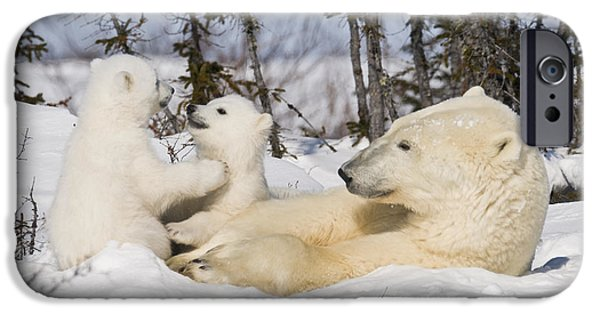 Bonding iPhone Cases - Mother polar bear watches her cubs play iPhone Case by Richard Berry
