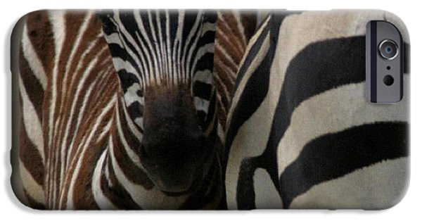 Wild Animals Pyrography iPhone Cases - Mothers Comfort iPhone Case by Dylan Bellerose