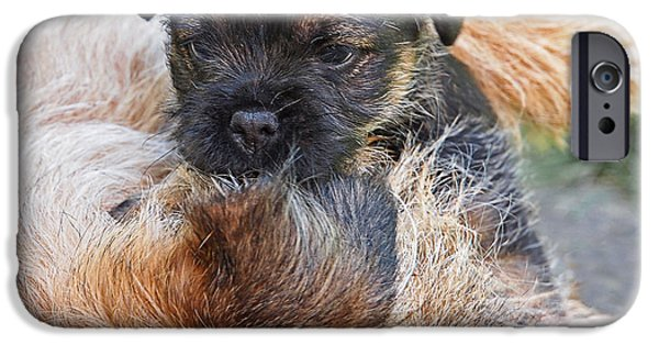 Cute Puppy iPhone Cases - Mothers Love - Border Terrier iPhone Case by Gill Billington