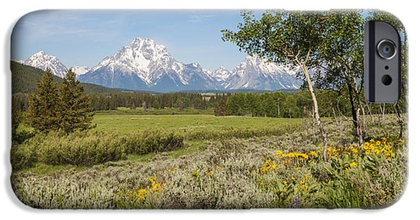 Arrow-leaf Balsamroot iPhone Cases - Mount Moran View iPhone Case by Brian Harig