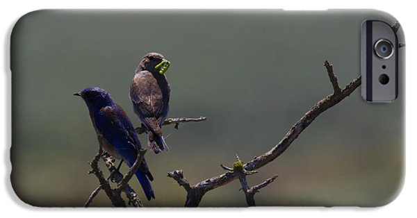 Bluebird iPhone Cases - Mountain Bluebird Pair iPhone Case by Mike  Dawson