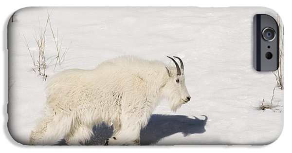 Wintertime iPhone Cases - Mountain Goat Stroll iPhone Case by Sandra Bronstein