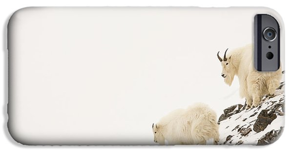 Born Adult iPhone Cases - Mountain Goats on a Snowy Slope iPhone Case by Tim Grams
