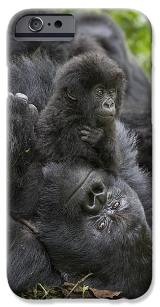 Gorilla iPhone Cases - Mountain Gorilla Baby Playing iPhone Case by Suzi  Eszterhas