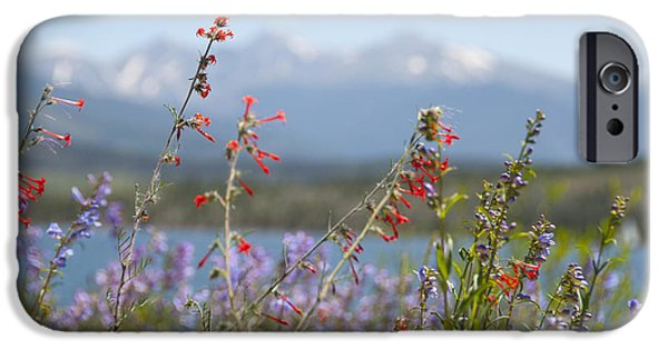 Reservoir iPhone Cases - Mountain Wildflowers iPhone Case by Juli Scalzi