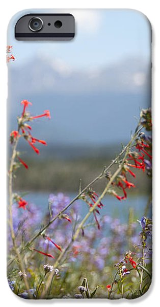Mountain Wildflowers iPhone Case by Juli Scalzi