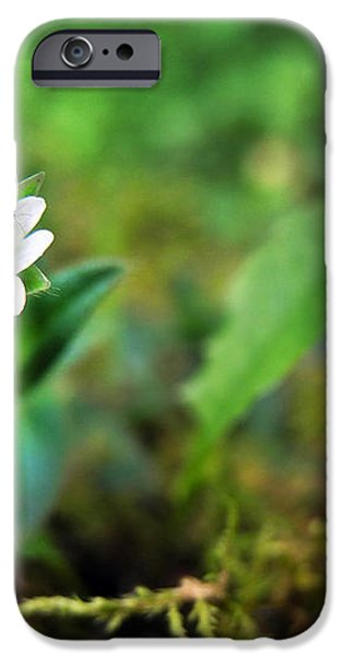Mouse-Ear Chickweed iPhone Case by Christina Rollo