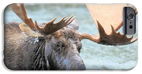 Moose In Water iPhone Cases - Mouthful Of Water iPhone Case by Adam Jewell