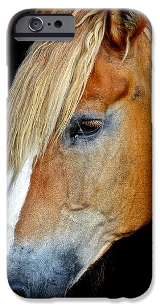 Horse Bit iPhone Cases - Mr Ed iPhone Case by Frozen in Time Fine Art Photography