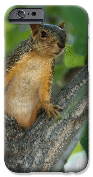 Fox Squirrel iPhone Cases - Mr.  Inquisitive  iPhone Case by Robert Bales